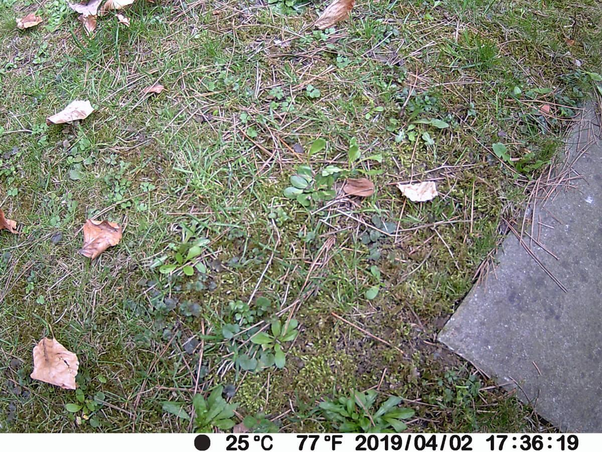 Egal in welchem Winkel: die Wildkamera erwies sich im Test als sehr performant und fertigte stets rasch Fotos an.