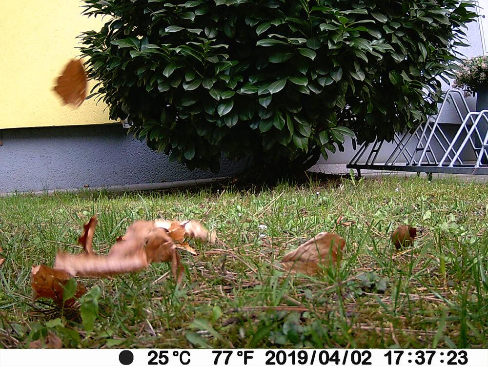 Das 2. Foto der Blätterserie: Hier liegen die Blätter schon fast am Boden.