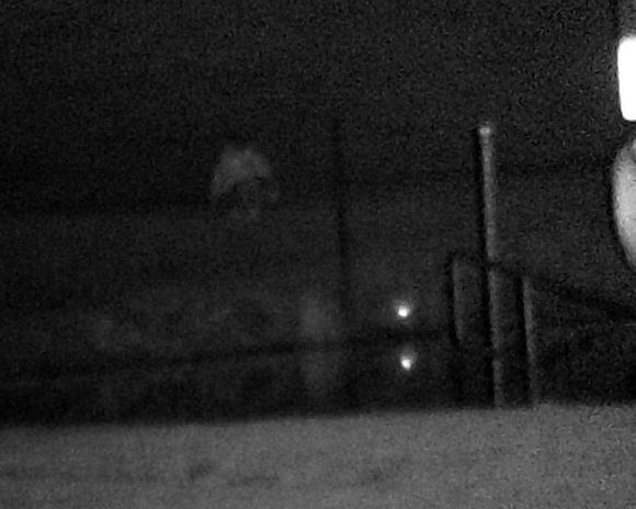 Auch die Raucherin am See konnte der nächtlichen Fernglas-Kamera nicht entgehen.