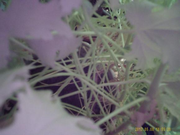 Die Spionagekamera kann sogar in Blumentöpfen platziert werden, wie es hier der Fall ist.